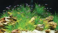 Eco-Friendly Aquariums