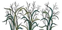 The Ethanol Debate