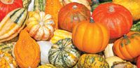 October Celebrations