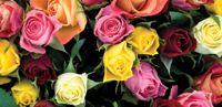 Fairness in Flowers