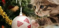 Keep your Pets Safe this Season