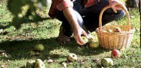 Gleaning Fresh Food