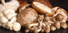 Meatless Monday: Mushrooms