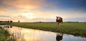 Grass-Fed vs Grain-Fed Meat