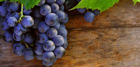 Grape Seed Extract (GSE) Has Cancer-Fighting Potential