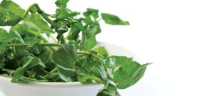 Discover the Wonders of Watercress