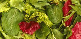 Glorious Salads