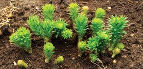 Botanicals to Battle Stress