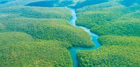 Ruining the Rainforest