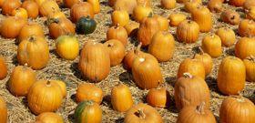 It's a Parade of Pumpkins!