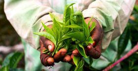 "Celebrate Fair Trade Fortnight with Fairtrade Canada's ""Take A Step"" Campaign"