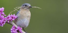 Help Native Birds with Native Landscaping