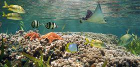 Wildlife Wednesday: Coral