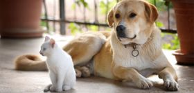 How Healthy Are Your Pets?