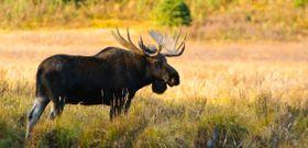 Wildlife Wednesday: National Wildlife Week