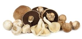 We're Mad for Mushrooms on Mushroom Day
