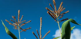 Capturing Carbon: The Latest Agricultural Trend