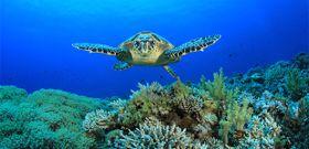 Make a Splash on World Oceans Day!