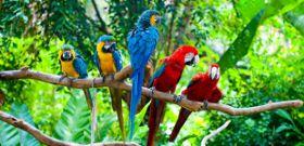 Wildlife Wednesday: Macaw
