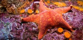 Wildlife Wednesday: Sea Star