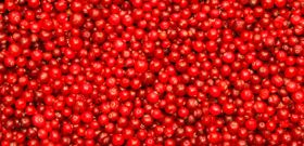 Celebrate Eat a Cranberry Day!