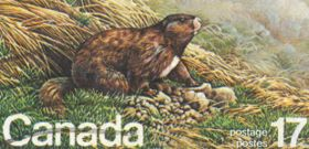 Wildlife Wednesday: Vancouver Island Marmot