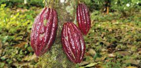 Eat Chocolate, Save a Tree