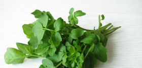 Munch on Watercress for Reduced Oxidative Stress after Exercise