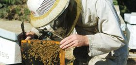 Plight of the Honeybee