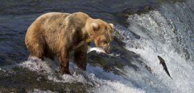 Wildlife Wednesday: Grizzly Bear