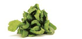 The Universal Antioxidant - ALA