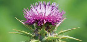 Top 5 Cleansing Herbs