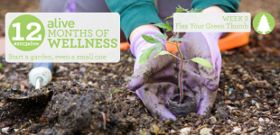 #2013alive: How Does Your Garden Grow?
