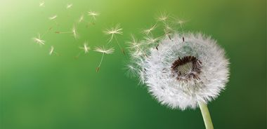 Natural and Organic Weed Control
