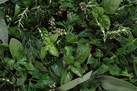 Herb Flavors To Savor