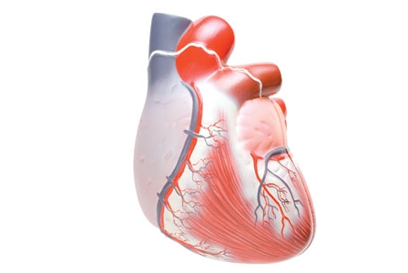 Curing an Inflamed Heart