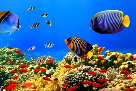 Another Consequence of Carbon Dioxide in the Oceans: Sick Fish