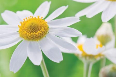 Aromatherapy for Seasonal Allergies