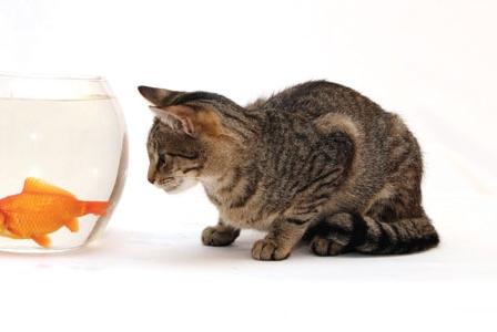 Solve Pet Kibble Quibbles