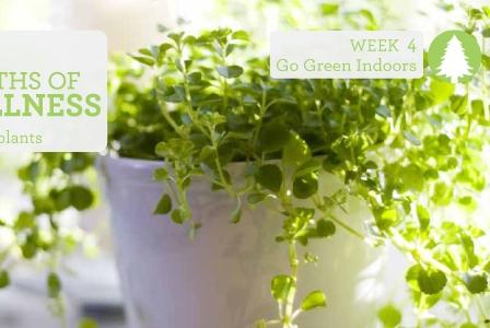 #2013alive: Go Green Indoors!