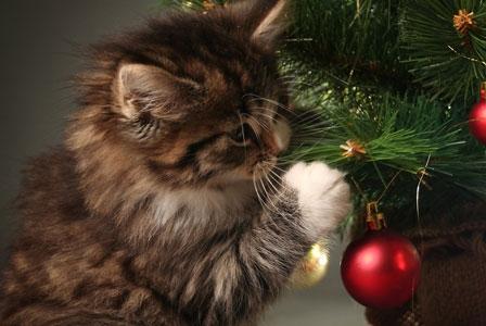 Happy Pet-Safe Holidays