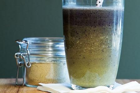 Nutritious Algae