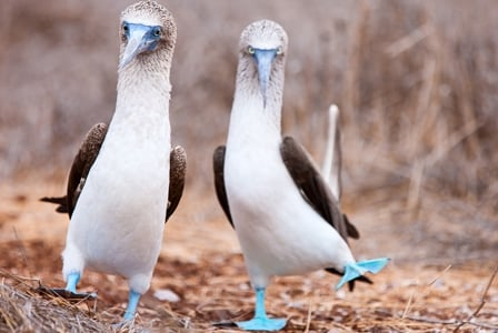 Wildlife Wednesday: Blue-Footed Booby