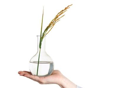 Pharmed Rice