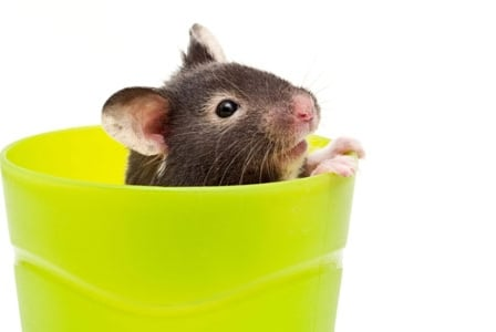 What's Worse Than a Dead Mouse In Your Soft Drink?