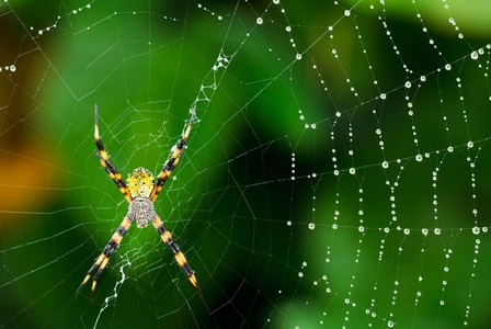 An Arachniphobe's Nightmare: Invasive Species Results in Spider Explosion