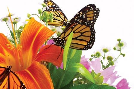 A Better Bouquet of Blooming Organics