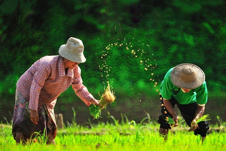 """World Food Day 2012: """"Agricultural Cooperatives: Key to Feeding the World"""""""