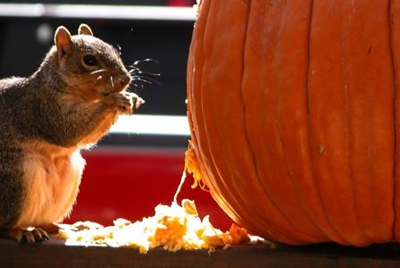 Pumpkin Recycling