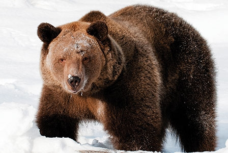 Canada's Endangered Species